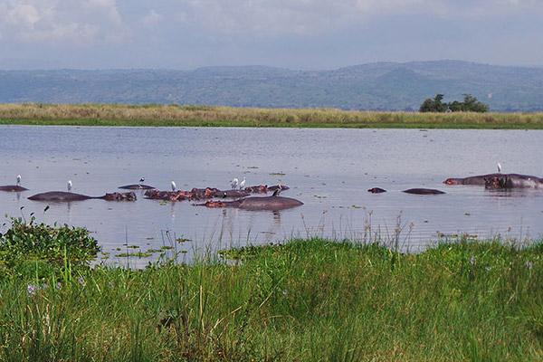 Aswa Lolim (Uganda)