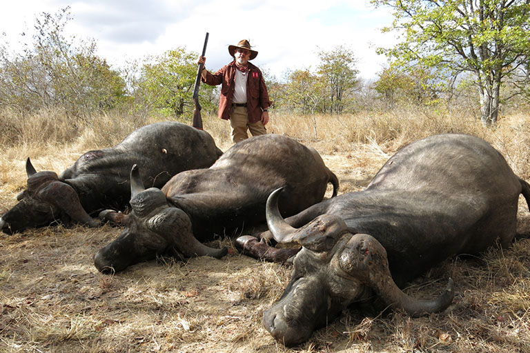 Big Game Hunting (Buffalo) in Africa