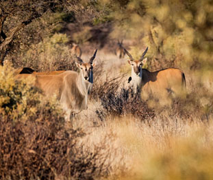 Hunting Camps & Lodges in Namibia